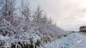 Southland_winter_003