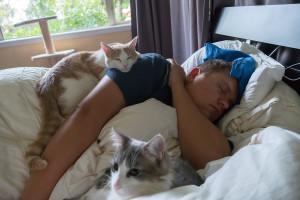 arthur cats