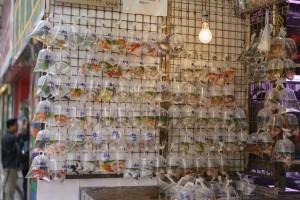 Hong_Kong_Shopping_004