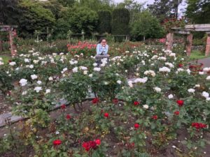 roses06